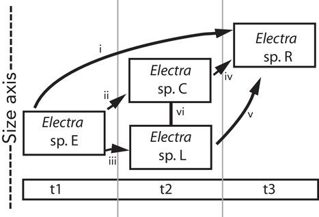 evo13800-fig-0003-m